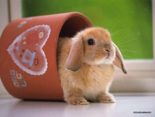 cute-funny-activities-of-rabbit-2