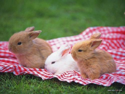 cute-funny-activities-of-rabbit-9