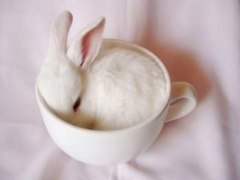 pets_in_tea_cup_16